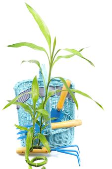 Free Green Plant Near Basket With Instrument Royalty Free Stock Image - 8295396