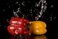 Free Bright Peppers And Water Splashes Stock Images - 8295714