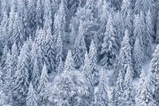 Free Winter Forest Stock Image - 8296241