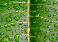 Free Water Drops On Green Leaf Royalty Free Stock Photos - 8296748