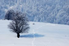 Free Winter Landscape Royalty Free Stock Images - 8297589