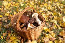 Free Mushroom Royalty Free Stock Images - 8297599