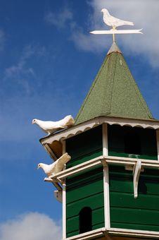 Free White Pigeon Stock Photo - 8297880