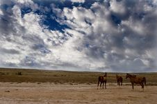 Free Wild Horses Stock Images - 8298454