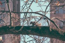 Free Squirrel In Tree Royalty Free Stock Photography - 82911847