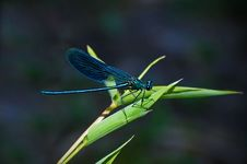 Free Teal Dragonfly On A Green Leafed Plant During Daytime Royalty Free Stock Images - 82931209