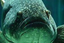 Free Black Gray Fish On Focus Photo Stock Photography - 82932022