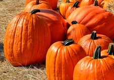 Free Close Up Photography Of Pumpkins Stock Image - 82932481
