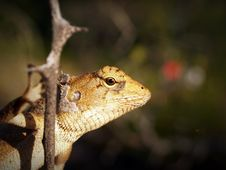Free Shallow Focus Photography Of Yellow And White Lizard Clinging On Tree Branch Stock Photo - 82933510