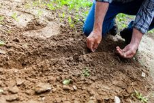 Free Man Planting Plant Stock Image - 82933741