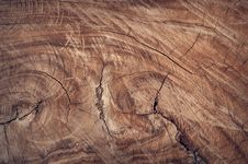 Free Section Of Large Diameter Sawn Through Tree Stock Photo - 82934020