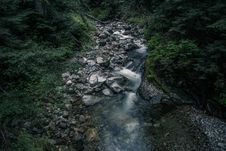 Free Dark Forest Stream Royalty Free Stock Photo - 82934165