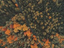 Free Top View Of Autumn Forest Royalty Free Stock Image - 82934606