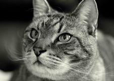 Free Portrait Of Cat Stock Photo - 82935610