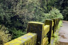 Free Concrete Fence With Green Moss Near Green Tree Royalty Free Stock Photography - 82935977