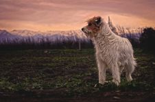 Free White And Brown Long Coated Dog Stock Images - 82936714