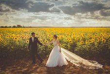 Free Groom Wearing Black Formal Coat Holding Bride In White Bridal Gown In Yellow And Green Sunflower Field During Daytime Royalty Free Stock Photos - 82936848