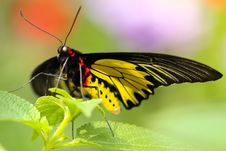 Free Black Red And Yellow Butterfly Perched On Green Leaf On Focus Photography Stock Images - 82936984
