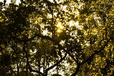Free Sunshine Through Green Leafed Tree Royalty Free Stock Photography - 82937607