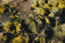 Free Moss On Rocks Stock Image - 82940031