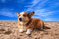 Free Pembroke Welsh Corgi Lying On The Sand Under White Cloud Blue Sky Royalty Free Stock Images - 82944719