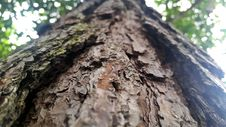 Free Old Bark On A Tree Trunk Stock Images - 82944734
