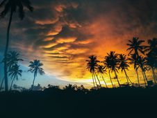 Free Silhouette Of Coconut Trees Under Dark Clouds During Golden Hours Royalty Free Stock Photography - 82945127