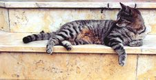 Free Grey Cat Lying In Marble Stairway Royalty Free Stock Photo - 82945705