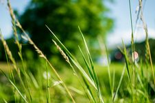 Free Green Grass During Daytime In Focus Photography Royalty Free Stock Photos - 82945828