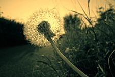 Free Close Up Photography Of Dandelion Stock Images - 82946174