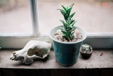 Free Green Cactus Plant On Window Stock Photo - 82946850