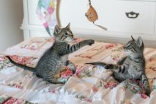 Free Tabby Kittens On Floral Comforter Stock Photos - 82947193