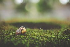 Free Macro Shot Photography Of Brown Snail Royalty Free Stock Photography - 82947727