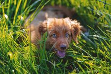 Free Brown Short Haired Puppy Lying On Green Grass Field During Daytime Stock Images - 82948054