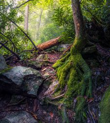 Free Green Moss Covered The Tree Roots Stock Images - 82948454