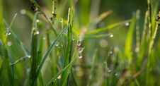 Free Grass With Dew Drops During Daytime Royalty Free Stock Photo - 82948635