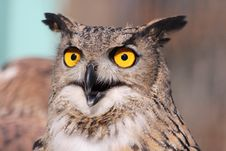 Free Close Up Photography Of African Owl Stock Image - 82948911