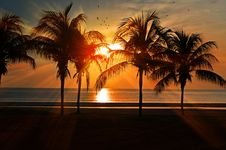 Free Palm Trees On Beach At Sun Set Royalty Free Stock Photo - 82949035