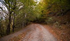 Free Forest Pathway During Daytime Royalty Free Stock Photography - 82949407