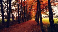 Free Orange Leaves Covered Pathway Between Trees During Daytime Royalty Free Stock Photo - 82949485