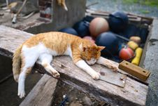 Free Orange Tabby Cat On Top Of Brown Wooden Plank Near Brown Basketball During Daytime Stock Photo - 82949520