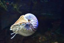Free Aquatic Animal In Aquarium Royalty Free Stock Image - 82949616