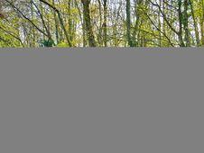Free Silver Porsche 911 Convertible Stock Photo - 82949750