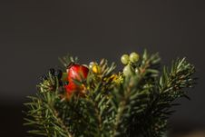 Free Selective Focus Of Red And Green Berries Fruit Royalty Free Stock Photos - 82949768