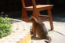 Free Brown And Gray Cat Near Wooden Chair On Daytime Stock Photo - 82949780