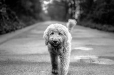 Free Dog On Path Royalty Free Stock Image - 82949796