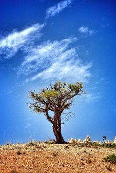 Free Tree On Hillside Against Blue Skies Stock Image - 82949971