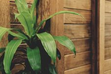 Free Green Leafed Plant By The Brown Wooden Fence Royalty Free Stock Images - 82949999