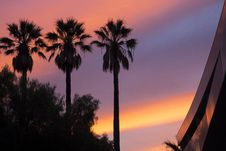 Free Low Angle View Of Three Palm Trees During Sunset Stock Images - 82950074