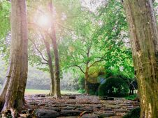 Free Photo Of Forest Trees And A Black Stone Pathway During Daytime Stock Photography - 82950092